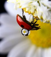 Reflections on Small Animals & Insects  fotonummer 209