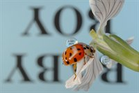 Reflections with Text on Ladybugs  fotonummer 254