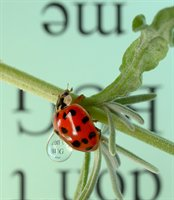 Reflections with Text on Ladybugs  fotonummer 255