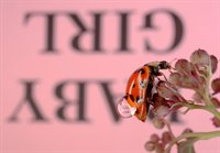 Reflections with Text on Ladybugs  fotonummer 258