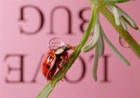Reflections with Text on Ladybugs  fotonummer 266