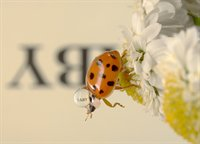 Reflections with Text on Ladybugs  fotonummer 267