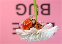 Reflections with Text on Ladybugs  fotonummer 348